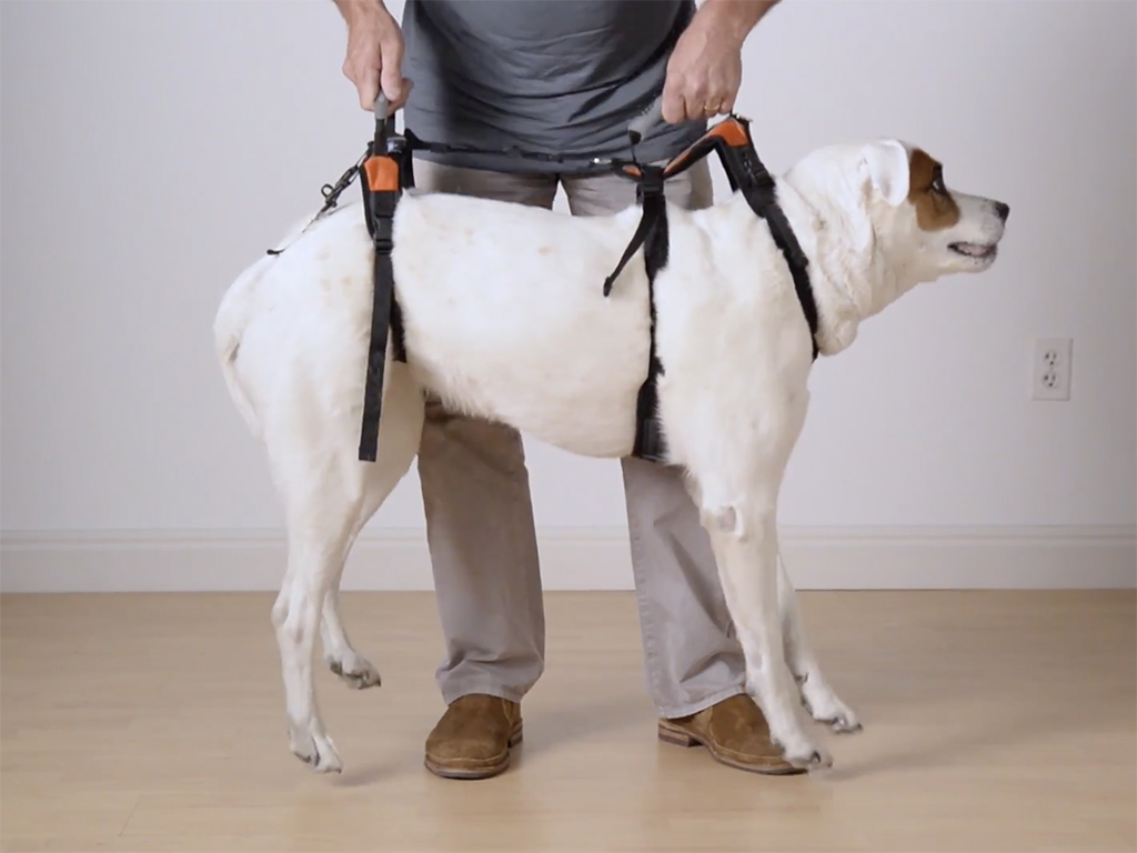 Dog Harness: Improving Your Dog's Mobility & Recovery